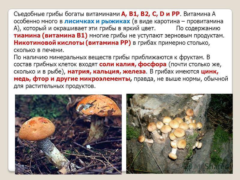 Съедобные грибы богаты витаминами А, В1, В2, С, D и РР. Витамина А особенно много в лисичках и рыжиках (в виде каротина – провитамина А), который и окрашивает эти грибы в яркий цвет. По содержанию тиамина (витамина В1) многие грибы не уступают зернов