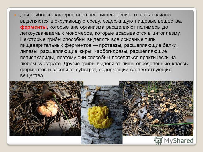 Для грибов характерно внешнее пищеварение, то есть сначала выделяются в окружающую среду, содержащую пищевые вещества, ферменты, которые вне организма расщепляют полимеры до легкоусваиваемых мономеров, которые всасываются в цитоплазму. Некоторые гриб