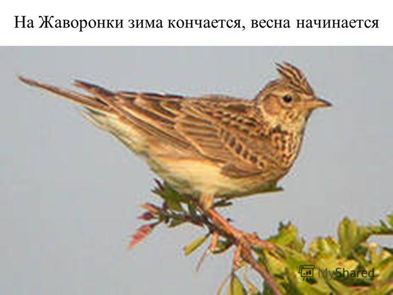 На Жаворонки зима кончается, весна начинается