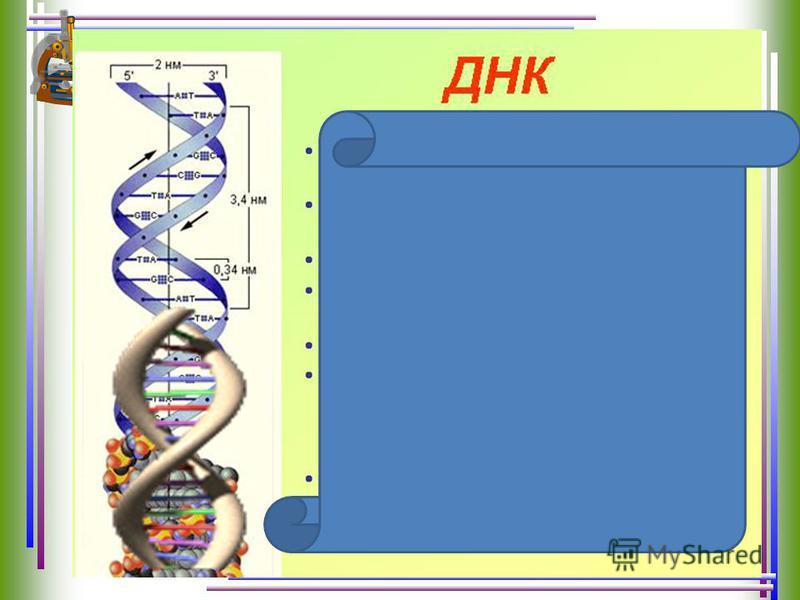 Процесс осуществляется в хромосомах на молекулах ДНК по принципу матричного синтеза. При участии ферментов РНК-полимеразы на соответствующих участках молекулы ДНК (генах) синтезируются все виды РНК (иРНК, тРНК, иРНК). В цитоплазму через ядерную оболо