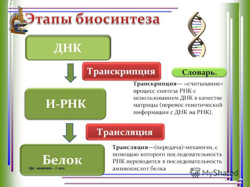 ДНК и-РНК т-РНК Рибосомы Ферменты Аминокислоты АТФ ДНК- хранитель наследственной информации. Служит матрицей. Переносит информацию от ДНК к месту сборки белковой молекулы. Содержит генетический код.генетический код. Переносят аминокислоты к месту био