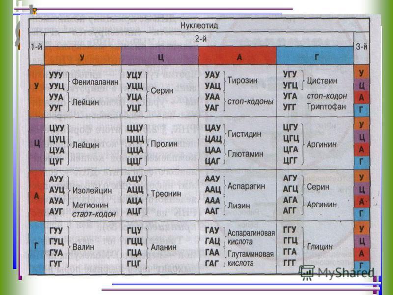 Подумаем: Дан участок ДНК, синтезируйте и-РНК. А-Г-Г-А-Ц-А-Т-Т-Т-А-Ц-Г-