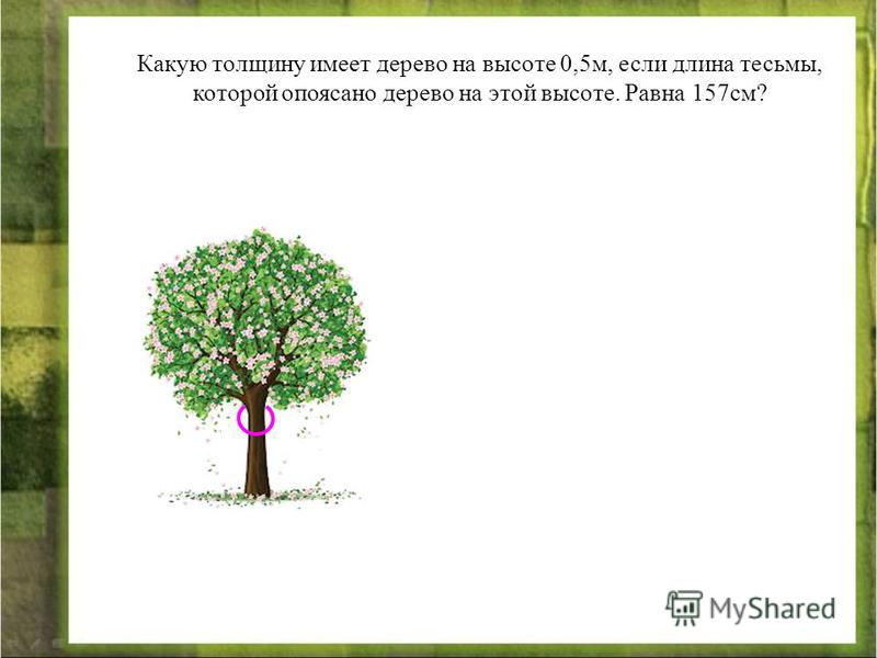 Какую толщину имеет дерево на высоте 0,5 м, если длина тесьмы, которой опоясано дерево на этой высоте. Равна 157 см?