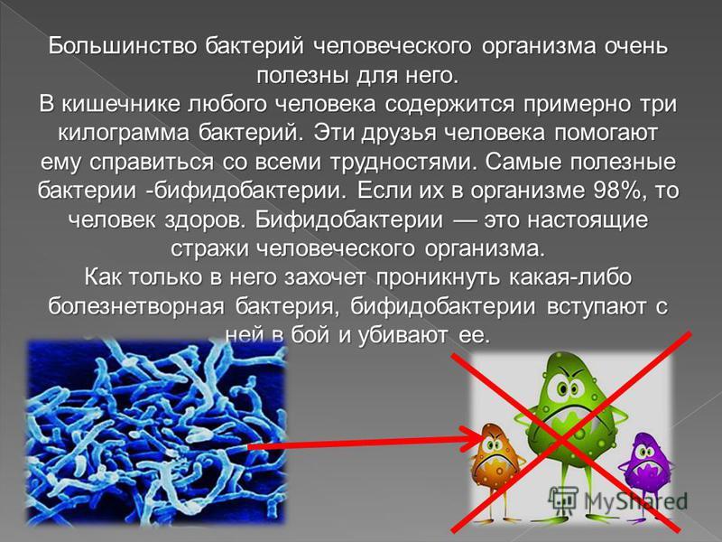Большинство бактерий человеческого организма очень полезны для него. В кишечнике любого человека содержится примерно три килограмма бактерий. Эти друзья человека помогают ему справиться со всеми трудностями. Самые полезные бактерии -бифидобактерии. Е