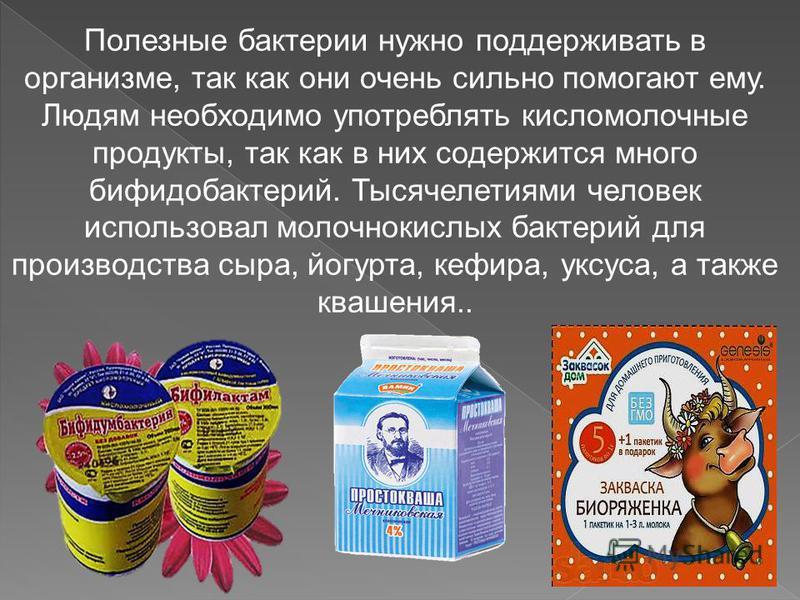 Полезные бактерии нужно поддерживать в организме, так как они очень сильно помогают ему. Людям необходимо употреблять кисломолочные продукты, так как в них содержится много бифидобактерий. Тысячелетиями человек использовал молочнокислых бактерий для
