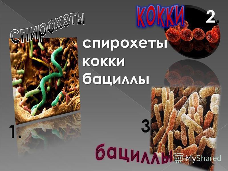 спирохетыкоккибациллы