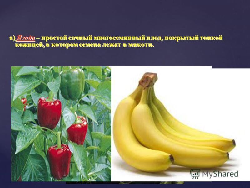 а) Ягода – простой сочный многосемянный плод, покрытый тонкой кожицей, в котором семена лежат в мякоти. а) Ягода – простой сочный многосемянный плод, покрытый тонкой кожицей, в котором семена лежат в мякоти. 1. Простые сочные плоды.