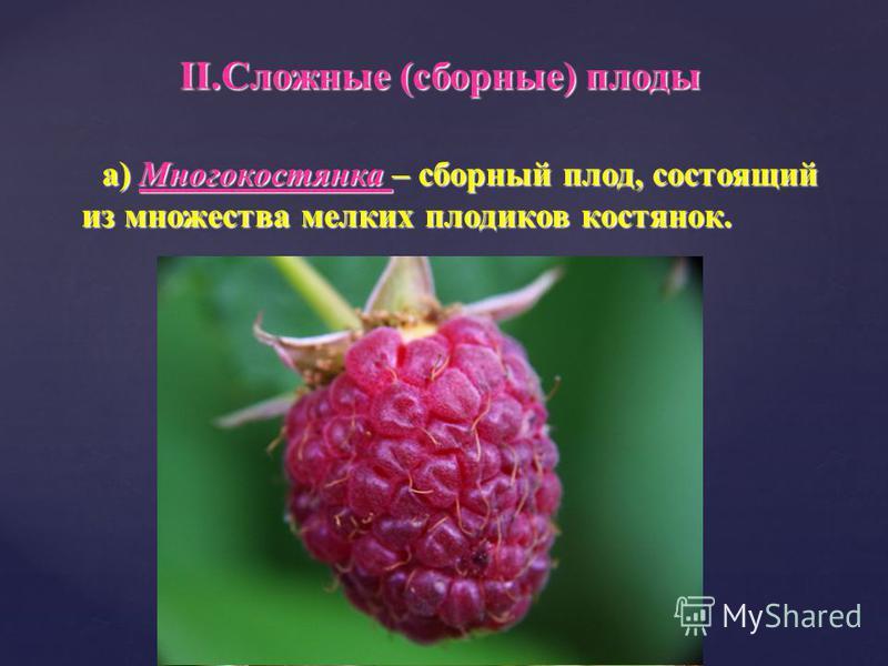 а) Многокостянка – сборный плод, состоящий из множества мелких плодиков костянок. а) Многокостянка – сборный плод, состоящий из множества мелких плодиков костянок. II.Сложные (сборные) плоды