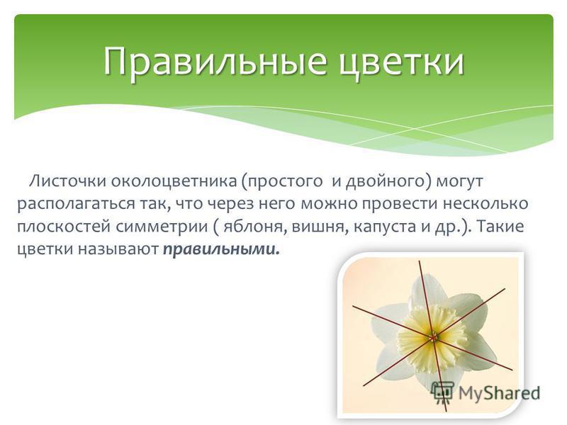 Листочки околоцветника (простого и двойного) могут располагаться так, что через него можно провести несколько плоскостей симметрии ( яблоня, вишня, капуста и др.). Такие цветки называют правильными. Правильные цветки