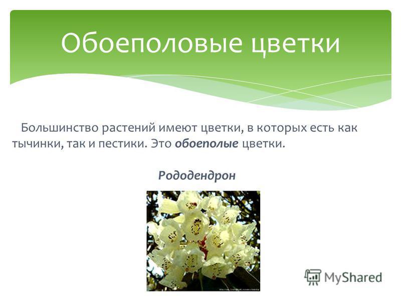 Большинство растений имеют цветки, в которых есть как тычинки, так и пестики. Это обоеполые цветки. Рододендрон Обоеполовые цветки
