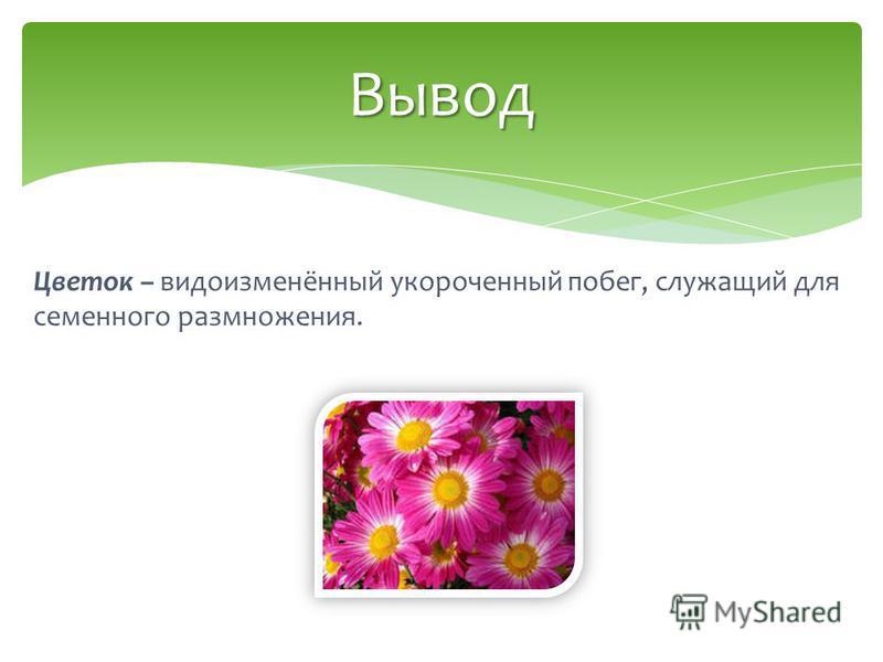 Цветок – видоизменённый укороченный побег, служащий для семенного размножения. Вывод