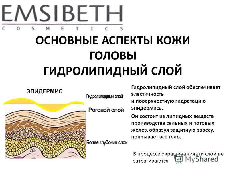ОСНОВНЫЕ АСПЕКТЫ КОЖИ ГОЛОВЫ ГИДРОЛИПИДНЫЙ СЛОЙ Гидролипидный слой обеспечивает эластичность и поверхностную гидратацию эпидермиса. Он состоит из липидных веществ производства сальных и потовых желез, образуя защитную завесу, покрывает все тело. В пр