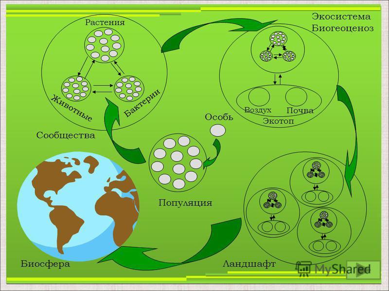Особь Популяция Сообщества Воздух Почва Экотоп Экосистема Биогеоценоз Ландшафт Биосфера Растения Животные Бактерии
