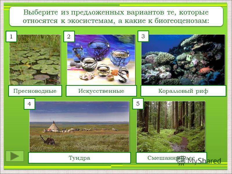 12 4 5 3 Пресноводные ИскусственныеКоралловый риф Тундра Смешанный лес Выберите из предложенных вариантов те, которые относятся к экосистемам, а какие к биогеоценозам: