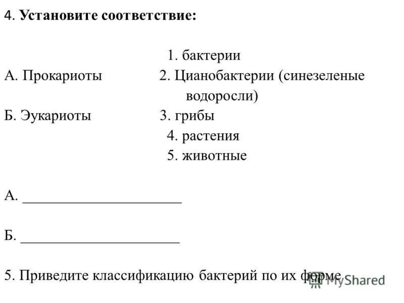 4. Установите соответствие: 1. бактерии А. Прокариоты 2. Цианобактерии (сине-зеленые водоросли) Б. Эукариоты 3. грибы 4. растения 5. животные А. _____________________ Б. _____________________ 5. Приведите классификацию бактерий по их форме