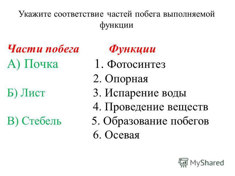 Части побега Функции А) Почка 1. Фотосинтез 2. Опорная Б) Лист 3. Испарение воды 4. Проведение веществ В) Стебель 5. Образование побегов 6. Осевая Укажите соответствие частей побега выполняемой функции