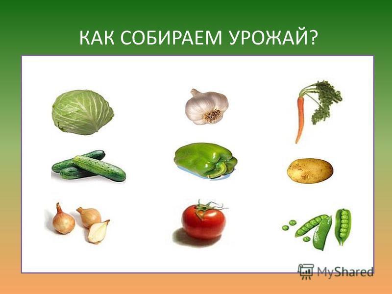 Называйте овощи по порядку.