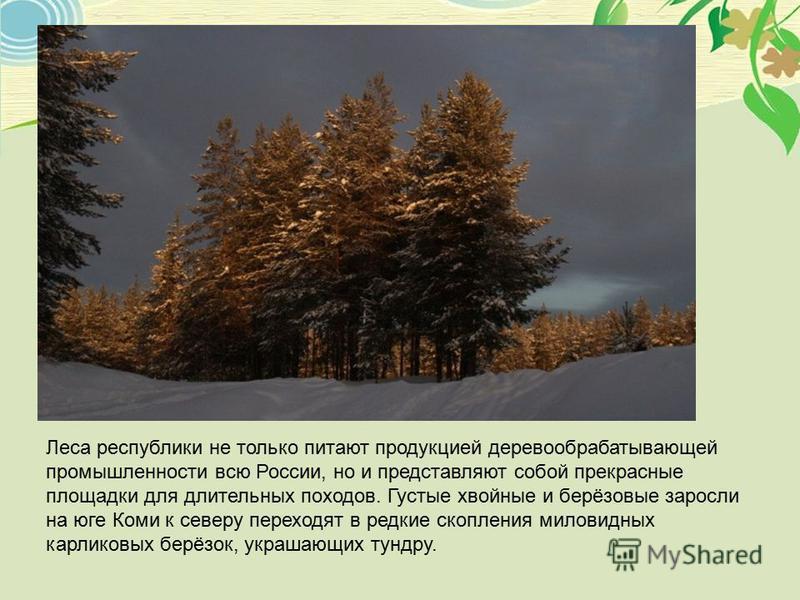 Леса республики не только питают продукцией деревообрабатывающей промышленности всю России, но и представляют собой прекрасные площадки для длительных походов. Густые хвойные и берёзовые заросли на юге Коми к северу переходят в редкие скопления милов