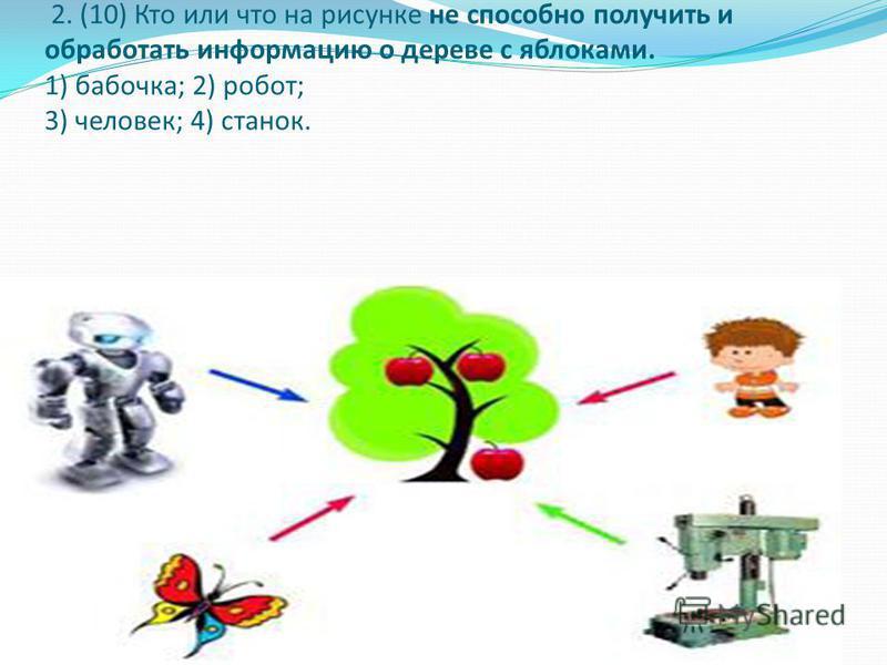 2. (10) Кто или что на рисунке не способно получить и обработать информацию о дереве с яблоками. 1) бабочка; 2) робот; 3) человек; 4) станок.