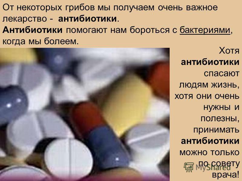 От некоторых грибов мы получаем очень важное лекарство - антибиотики. Антибиотики помогают нам бороться с бактериями, когда мы болеем. Хотя антибиотики спасают людям жизнь, хотя они очень нужны и полезны, принимать антибиотики можно только по совету