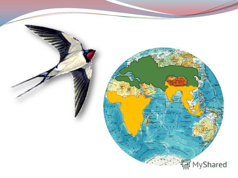 В прошлом, когда птичьи перелеты еще не были изучены, существовало множество самых невероятных вымыслов. Например, в XVIII веке один натуралист утверждал, что птицы улетают... на Луну. Добираются туда будто за 60 дней и погружаются в спячку, потому ч