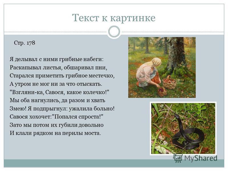 Текст к картинке Я делывал с ними грибные набеги: Раскапывал листья, обшаривал пни, Старался приметить грибное местечко, А утром не мог ни за что отыскать.