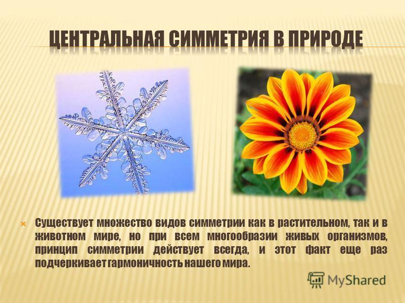 Существует множество видов симметрии как в растительном, так и в животном мире, но при всем многообразии живых организмов, принцип симметрии действует всегда, и этот факт еще раз подчеркивает гармоничность нашего мира.
