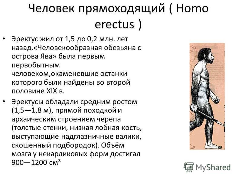 Человек прямоходящий ( Homo erectus ) Эректус жил от 1,5 до 0,2 млн. лет назад.«Человекообразная обезьяна с острова Ява» была первым первобытным человеком,окаменевшие останки которого были найдены во второй половине XIX в. Эректусы обладали средним р