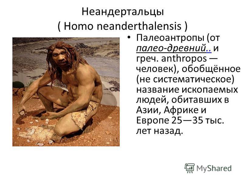 Неандертальцы ( Homo neanderthalensis ) Палеоантропы (от палео-древний.. и греч. anthropos человек), обобщённое (не систематическое) название ископаемых людей, обитавших в Азии, Африке и Европе 2535 тыс. лет назад...