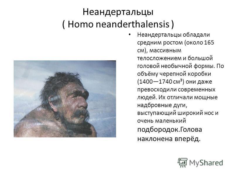 Неандертальцы ( Homo neanderthalensis ) Неандертальцы обладали средним ростом (около 165 см), массивным телосложением и большой головой необычной формы. По объёму черепной коробки (14001740 см³) они даже превосходили современных людей. Их отличали мо