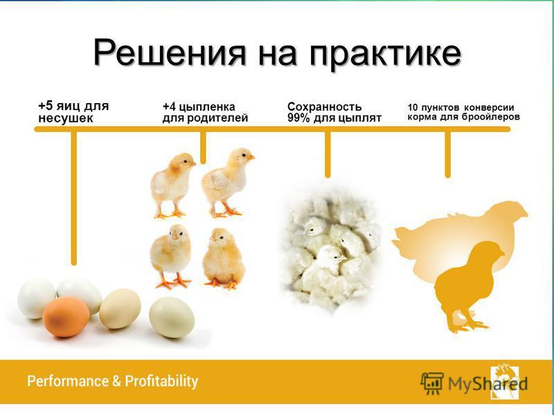Решения на практике +5 яиц для несушек +4 цыпленка для родителей Сохранность 99% для цыплят 10 пунктов конверсии корма для бройлеров