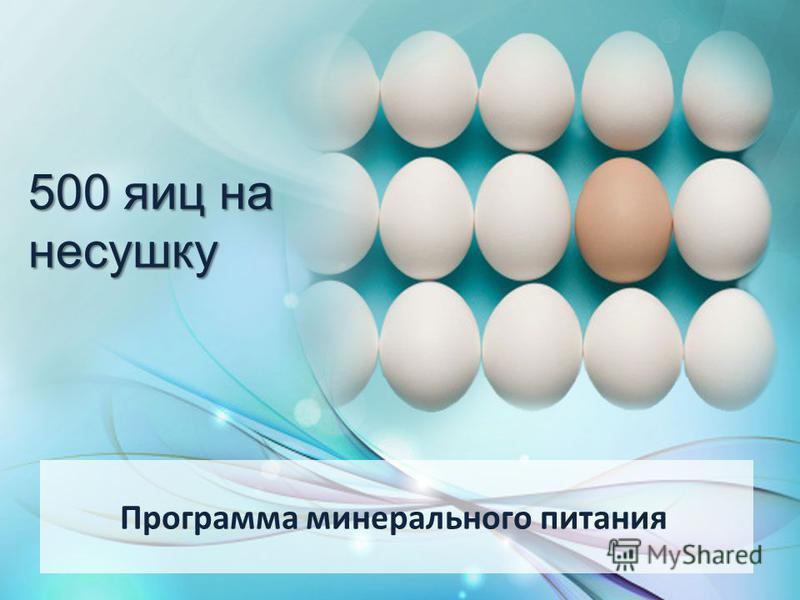 500 яиц на несушку Программа минерального питания