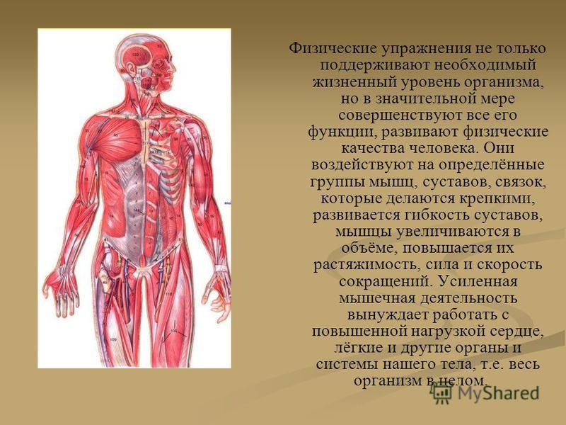 Физические упражнения не только поддерживают необходимый жизненный уровень организма, но в значительной мере совершенствуют все его функции, развивают физические качества человека. Они воздействуют на определённые группы мышц, суставов, связок, котор