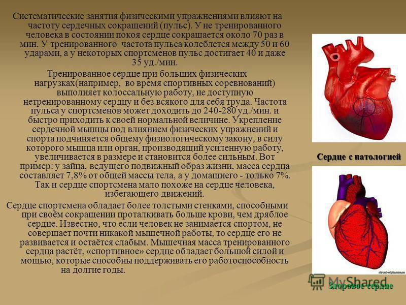Систематические занятия физическими упражнениями влияют на частоту сердечных сокращений (пульс). У не тренированного человека в состоянии покоя сердце сокращается около 70 раз в мин. У тренированного частота пульса колеблется между 50 и 60 ударами, а