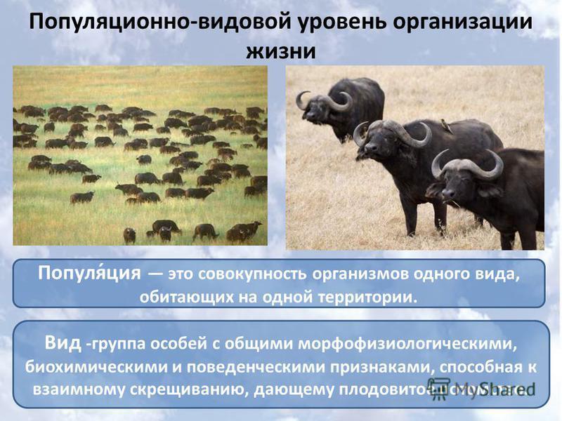 Популяционно-видовой уровень организации жизни Популя́ция это совокупность организмов одного вида, обитающих на одной территории. Вид -группа особей с общими морфофизиологическими, биохимическими и поведенческими признаками, способная к взаимному скр