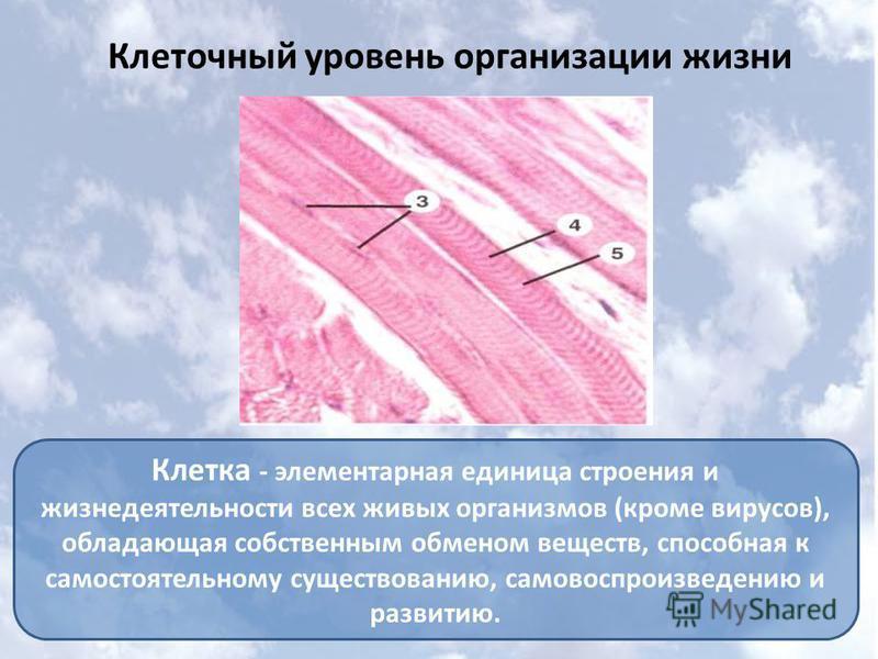 Клеточный уровень организации жизни Клетка - элементарная единица строения и жизнедеятельности всех живых организмов (кроме вирусов), обладающая собственным обменом веществ, способная к самостоятельному существованию, самовоспроизведению и развитию.