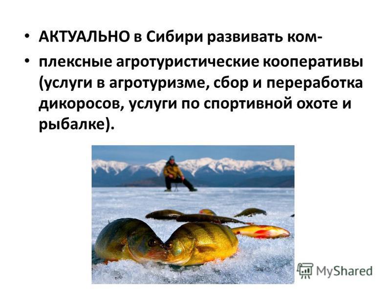 АКТУАЛЬНО в Сибири развивать комплексные агротуристические кооперативы (услуги в агротуризме, сбор и переработка дикоросов, услуги по спортивной охоте и рыбалке).