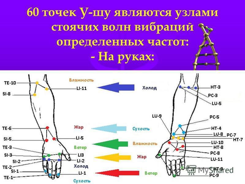 60 точек У-шуй являются узлами стоячих волн вибраций определенных частот: - На руках: