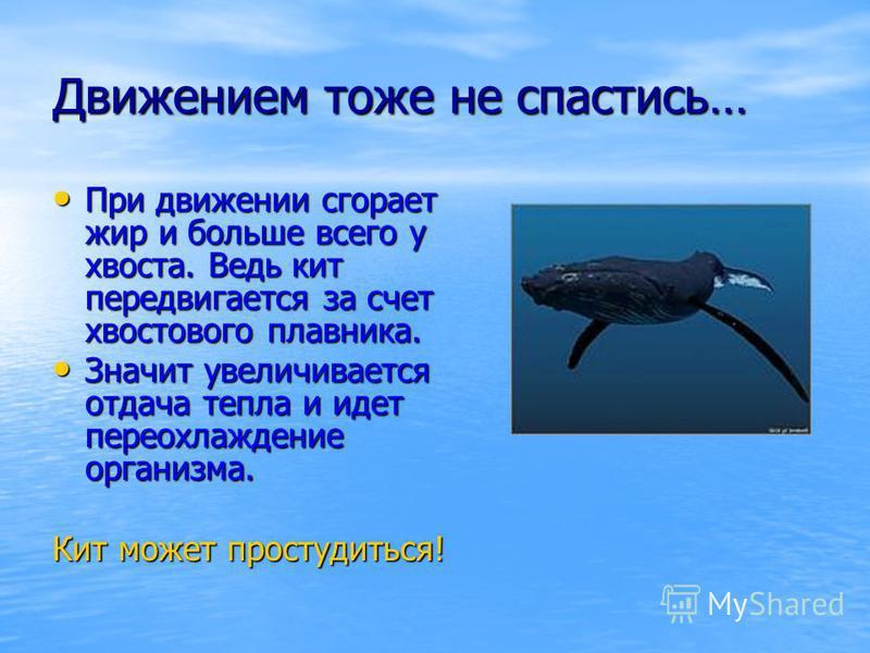 Движением тоже не спастись… При движении сгорает жир и больше всего у хвоста. Ведь кит передвигается за счет хвостового плавника. При движении сгорает жир и больше всего у хвоста. Ведь кит передвигается за счет хвостового плавника. Значит увеличивает