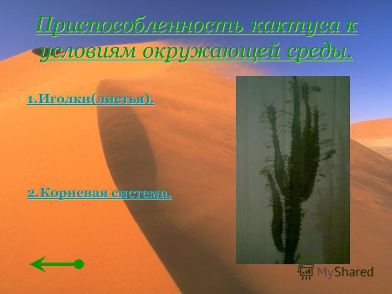 Приспособленность кактуса к условиям окружающей среды. 1.Иголки(листья). 2. Корневая система. 2. Корневая система.