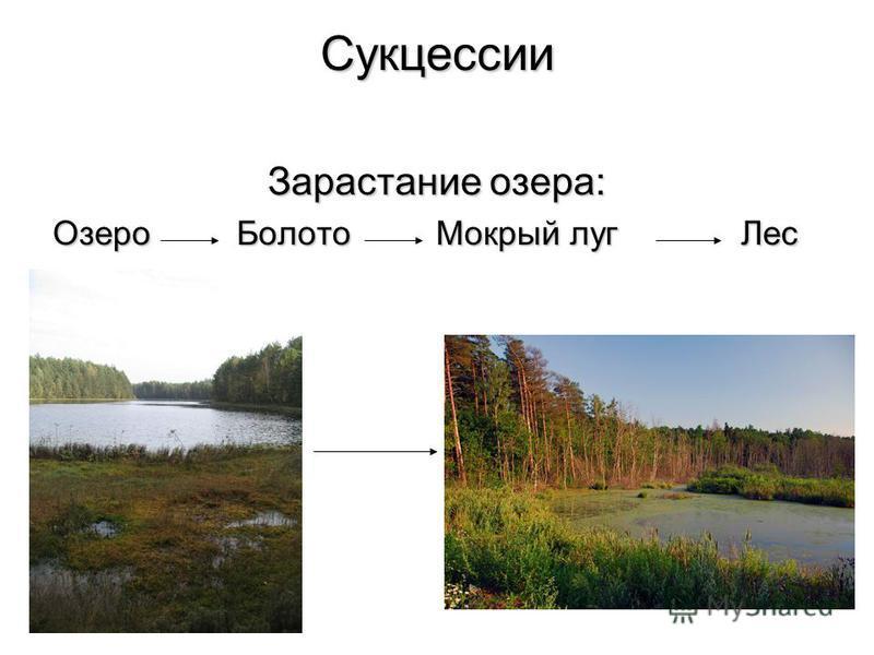 Развитие и смена экосистем Циклические перемены обусловлены периодическими изменениями в природе суточными, сезонными и многолетними.Циклические перемены обусловлены периодическими изменениями в природе суточными, сезонными и многолетними. Поступател