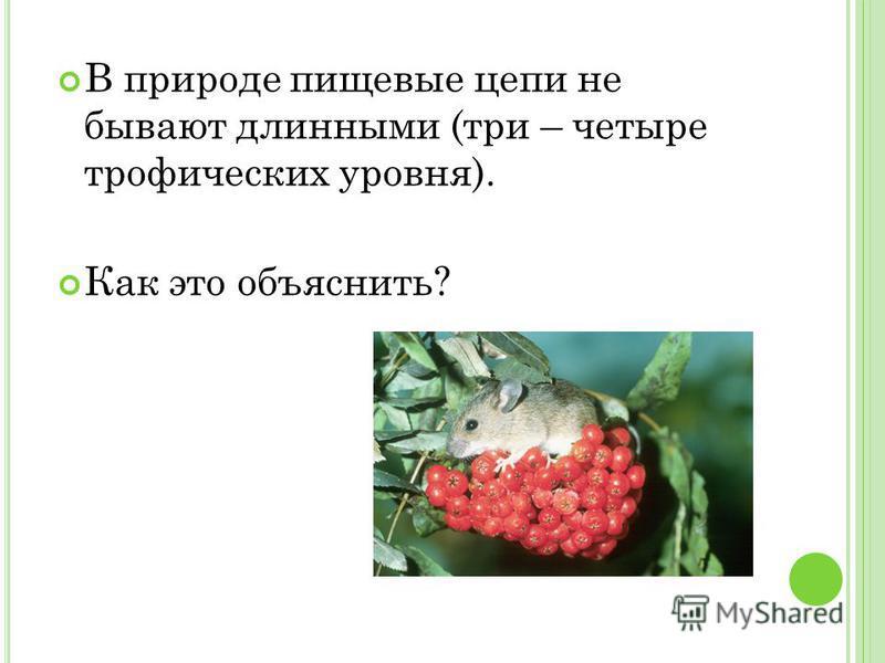 В природе пищевые цепи не бывают длинными (три – четыре трофических уровня). Как это объяснить?