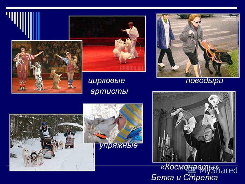 цирковые поводыри артисты упряжные «Космонавты» Белка и Стрелка