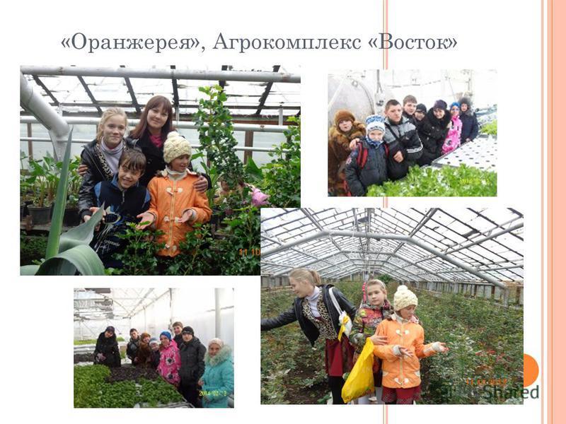 «Оранжерея», Агрокомплекс «Восток»