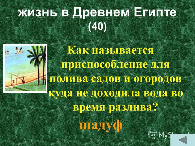 жизнь в Древнем Египте (30) Как называется сборщик налогов? писец