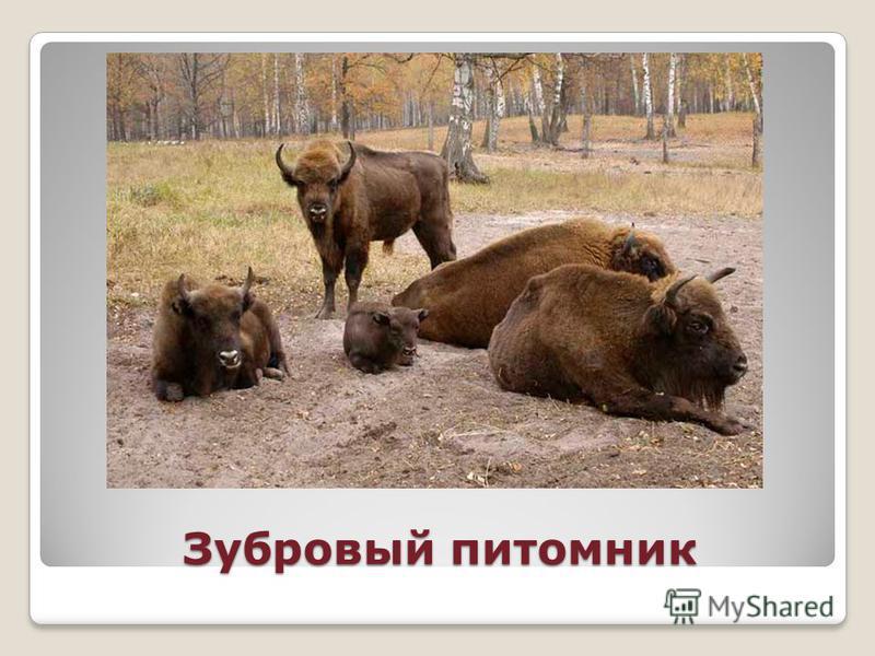 На территории Рязанской области 103,5 тыс. га особо охраняемых природных территорий, в том числе: Мещёрский национальный парк, Окский за поведник, 47 заказников, 57 памятников природы.Мещёрский национальный парк Окский за поведник Одна из важнейших э