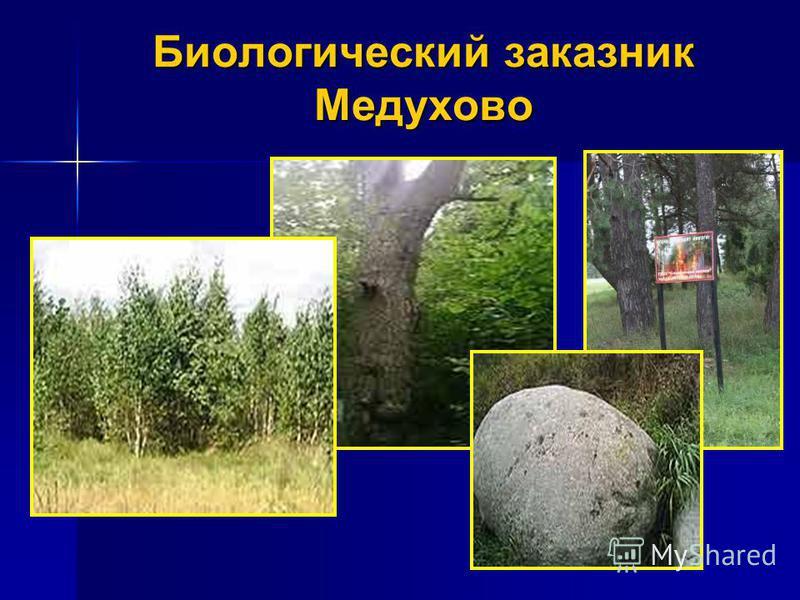 Биологический заказник Медухово