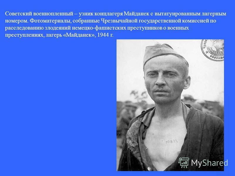 Советский военнопленный – узник концлагеря Майданек с вытатуированным лагерным номером. Фотоматериалы, собранные Чрезвычайной государственной комиссией по расследованию злодеяний немецко-фашистских преступников о военных преступлениях, лагерь «Майдан