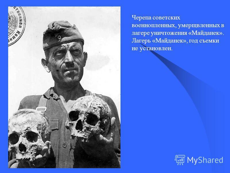 Черепа советских военнопленных, умерщвленных в лагере уничтожения «Майданек». Лагерь «Майданек», год съемки не установлен.
