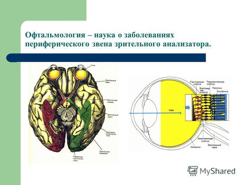 Офтальмология – наука о заболеваниях периферического звена зрительного анализатора.